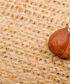 Hazelnuts on burlap background — Stock Photo