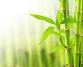 Bamboo background with copy space — Stock Photo