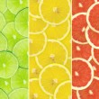 Abstract background of citrus slices — Stock Photo #37526903