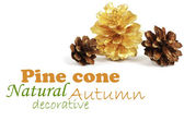 Two pine cones and one golden cone — Stock Photo