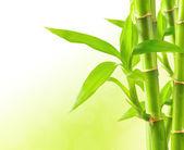 Bambus tło z kopia miejsce — Zdjęcie stockowe