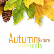 Autumn maple leaf isolated — Stock Photo