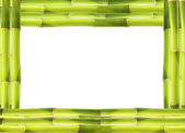 Bamboo frame made of stems — Stock Photo