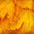 Background group autumn orange leaves. Outdoor. — Stock Photo
