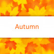 Autumn background. — Stock Photo #39010233