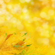 Autumn — Stock fotografie #39011397