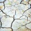 Dry ground — Stock Photo #38052379