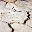 Dry ground — Stock Photo #38052435