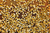 Bee pattern — Stock Photo