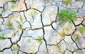 Solo seco — Foto Stock