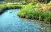 Swamp — Stock Photo