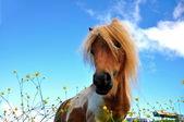 Eating pony — Stock Photo