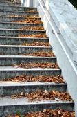 Autumn staircase — Stock Photo