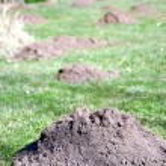 Molehills — Stock Photo #42345853