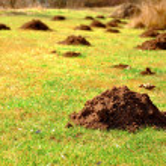 Molehills — Stock Photo #42345905
