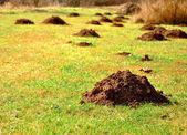 Molehills — Foto Stock