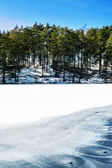 Spring forest with ornament on frozen lake. Outdoors. — Stock Photo