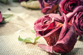 Dried old maroon rose bud with retro filter. Closeup. — Stock Photo