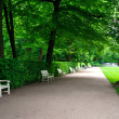 Wide alley with white benches in green summer Lazienki park. — Stock Photo #51760597