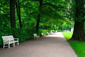 Wide alley with white benches in green summer Lazienki park. — Stock Photo