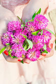 Many wishes. Girl hands holding meadow clover or trefoil bunch. — Stock Photo