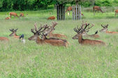 Group of deer's standing and sitting in a park with crows — Stockfoto