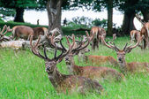 Group of deer's sitting in trees — Stock Photo