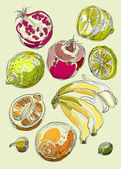 Set of fruits. Freehand drawing. — Vector de stock