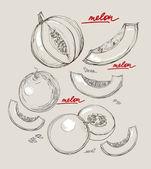Vector hand drawing juicy melons — Stock Vector