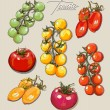 Vector hand drawing set tomatoes — Stock Vector #51170415