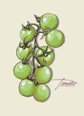Vector hand drawing juicy tomatoes — Stock Vector