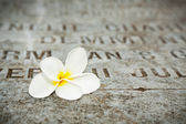 White Flower on tombstones in old cemetery Museum Prasasti Jakarta Indonesia — 图库照片