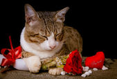 Cat holding red Rose with heart shape — Stok fotoğraf