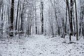 Peaceful Winter Walk — Stock Photo
