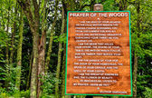 Prayer Of The Woods — Stock Photo