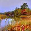 Save The Wetlands — Stock Photo