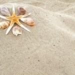 Starfish And Shells — Stock Photo #50801533