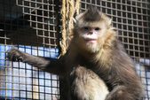 Monkey zoo — Stock Photo