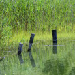 Quiet green waters Connecticut saltwater marsh — Stock Photo