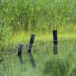 Quiet green waters Connecticut saltwater marsh — Stock Photo #37776265