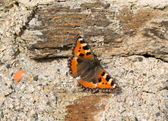 Butterfly at house wall — Stockfoto