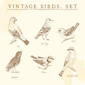 Set of vintage birds. — Stock Vector