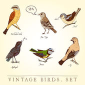 Set of vintage colored birds — Stock Vector