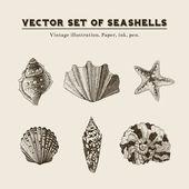 Set of vector vintage seashells. — Stock Vector