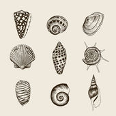 Set of vector vintage seashells. — Stock Vector