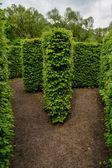Přírodní bludiště stěna stromů — Stock fotografie
