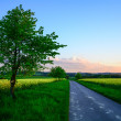 Tree by the roadside — Stock Photo #44559011