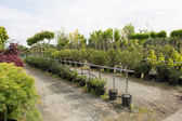 Trees for sale in a row, in pots — Stock Photo