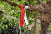 Tree marked for sale — Stock Photo