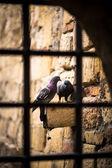 Ptaki miłości — Zdjęcie stockowe